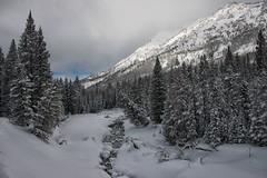 Along the Bannock Trail (dbushue) Tags: trees winter snow mountains nature creek landscape snowshoe nikon scenery montana january hike trail yellowstonenationalpark ynp 2014 sodabuttecreek bannocktrail dailynaturetnc14 dailynaturetnc15