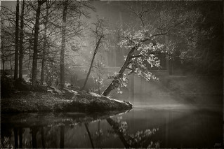 Early Morning at Bass Pond ©