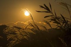 20141206-_DSC5855 (Fomal Haut) Tags: sunset sun japan   su