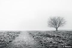 path with solitary tree (Mimadeo) Tags: road morning winter light blackandwhite sunlight white mist black cold tree nature wet grass rain misty fog way landscape countryside haze track mood path foggy nobody trail rainy lonely hazy solitary footpath pathway absence wetness soliltude