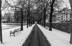 Paths of winter - Uptown concrete, straight ahead