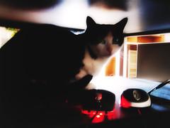 Sjaj u tami (morskikonjic) Tags: light red cat key darkness low mouses
