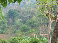 Hill Country of Northern Thailand