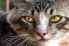 IMG_94775 (Max Hendel) Tags: cat gato felino streetcat felie bichano animaldeestimação beautifulcat animaldoméstico canoneosdigital photobymaxhendel bymaxhendel photographedformaxhendel fotografadopormaxhendel maxhendel photographedbymaxhendel pormaxhendel canoneosphoto photographermaxhendel maxhendelphotography