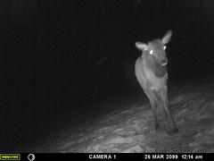 Rock Bottom Ranch Trail Camera Footage