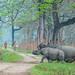 Rhino Protection