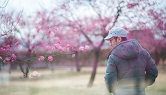 /Adam (Nazra Zahri) Tags: winter portrait man japan asian japanese nikon exposure raw doubleexposure blossoms plum 85mm double multipleexposure nikkor okayama saidaiji  2015 85mmf18d d700