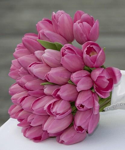 tulip-58