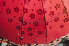 Water on Sakura (sunburn185) Tags: street travel japan umbrella nikon kyoto streetphotography sakura cherryblossoms travelphotography letsgosomewhere stevencheahphotography perthtravelphotographer