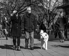 Sunny last day in february (Thomas Kriehn Photography) Tags: street bw dog white streetart black animal essen candid streetphotography olympus hund sw 365 schwarz tier omd weis inthestreets project365 365days em5 365daysproject 365tage strasenfotografie 3652015