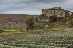 La maison des lavandes (bobpado) Tags: france nature canon landscape provence paysage canoneos ferme 24105 alpesdehauteprovence lavandes sudest 60d lavendes lerocherdongle