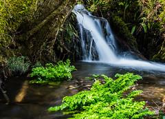Yarner Wood (HullGreenwood) Tags: england water waterfall devon dartmoor d600