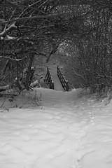 Snowy bridge (trusler_james) Tags: wood bridge trees winter snow cold tree landscape countryside wooden northampton sony northamptonshire january freezing fields dslr footpath a350