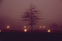 Brume (Sandradareal) Tags: pink light red france night dark time sombre wait temps paysage nuit arbre lumires brume