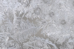 (rossbysmom) Tags: winter cold color ice digital landscape patterns windowfrost sigma105f28macro iceflowers fernfrost nikond7000