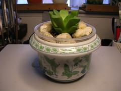Cactus-Tillandsia-3c (cuirung) Tags: jade gollum haworthia airplant crassula felina faucaria perforata tigerjaw cactustillandsia bulbbolsa