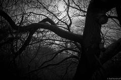 Dark (ralf.kerkhoff) Tags: winter jahreszeit natur bume botanik reken kleinreken