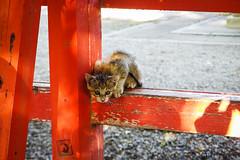 Today's Cat@2016-07-20 (masatsu) Tags: cat pentax catspotting mx1 thebiggestgroupwithonlycats