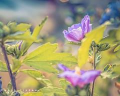 Taking in the Sun (Chris Liszak Photography) Tags: flowers plants sun plant flower color colour wow photo sharp stunning hdr basking nikond7100 chrisliszakphotography