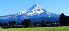 Mt. Hood (dmeeds (on and off)) Tags: mountain oregon landscape mthood mountainpeak