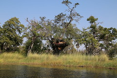 Tree House (www.mattprior.co.uk) Tags: adventure adventurer journey explore experience expedition safari africa southafrica botswana zimbabwe zambia overland nature animals lion crocodile zebra buffalo camp sleep elephant giraffe leopard sunrise sunset