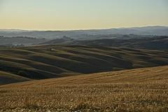 Working in a painting (Antonio Cinotti ) Tags: landscape paesaggio toscana tuscany italy italia siena hills colline campagnatoscana cretesenesi asciano nikond7100 nikon d7100 rollinghills nikon1685 sunset tramonto summer