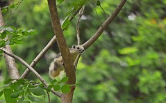 I believe I can fly ! (Bug_gl) Tags: wild green rot nature animal forest flying quiet foi storybook squirrle