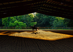 Last ride of the day. (vtcollins) Tags: horse rider evening light shadows colorful