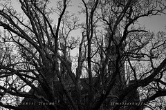 Towers of Richardson Olmsted Complex - Buffalo, NY (DTD_3202) (masinka) Tags: buffalo ny newyork tower richardson olmsted complex state asylum insane hotel henry architecture historical building urban photography cityscape tree timelessbuffalocom etbtsy