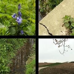 spring (Frie Van Grunderbeeck) Tags: belgium belgi vlaanderen vlaamsbrabant hageland outdoor landscape landschap lente spring voorjaar vertrijk boutersem bloem flower