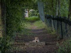 il guardiano della via (conteluigi66) Tags: gatto cat art arte paint via strada passaggio luigiconte