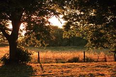 Sunset behind the trees (Matthew Douglass) Tags: