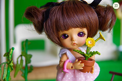 Belle in Garden (Ylang Garden) Tags: belle lati white tan skin garden megahouse miniature