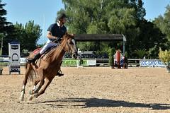 DSC_0870 (2) (ploufjf_64) Tags: paus show jumping chevaux pau 2016