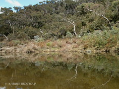 Reflections, Queanbeyan River, NSW (BRDR images) Tags: australia nsw yanununbeyanreserve queanbeyanriver wildernessphotography ourfragileearth reflections australianlandscape bushwalking
