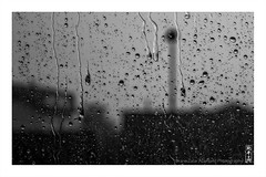 august_rain (alamond) Tags: hidden mosquito hide rain drop drops water window august afternoo shadow light glass be blackandwhite monochrome canon 7d markii mkii llens ef 1740 f4 l usm alamond brane zalar