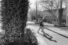 Tempe Marketplace (GC_Dean) Tags: tempe arizona tempemarketplace shoppingmall driveway crosswalk landscaping bw blackandwhite blackwhite film 35mm shadows flora palm palmtree hardlight building street emptiness mundane city cityscape urban urbanlandscape sociallandscape space structure