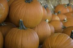 DSC_0176 fall pumpkins (snolic...linda) Tags: arkansas 501 fall pumpkins conway