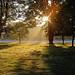 Morning+mist