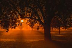 Morgenstund hat Gold im Mund (Sascha Wolf) Tags: sonnenaufgang morgen baum imlicht natur herbst nebel autumn gegenlicht sonne