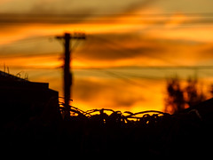 Power Lines (Steve Taylor (Photography)) Tags: black monocolor monocolour orange yellow newzealand nz southisland canterbury christchurch northnewbrighton plant shape bokeh glow silhouette sunny sunset autumn power line pole