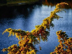 In the light, Norway (Vest der ute) Tags: norway rogaland djupadalen waterscape landscape branch water fav25