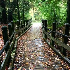 Swallow Falls SP ~ trail to Muddy Creek Falls - HFF! (karma (Karen)) Tags: swallowfallssp garrettco maryland mdstateparks forests woods boardwalks trees leaves fallcolor fences fencefriday hff iphone
