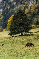 DSC04732 (frame=photo) Tags: austria kitzsteinhorn kaprun fall