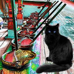 The Ship's Cat on Guard Duty (Lemon~art) Tags: treatthis kreativepeople cat ship bucket deckbrush onduty fish fun whimsy