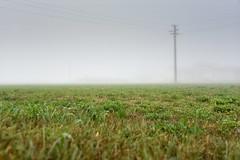 out of principle (pianlux) Tags: prato erba autunno nebbia palo luce grigio grey green grass solo alone middle outofprinciple principle