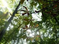 (Painter Snake) Tags: europe spain andaluca granada tour beauty wonderful autumn october 2016 friends walk nature trees tree green forest sun sunny natural apsphotographs paintersnake