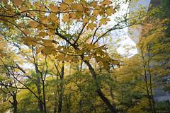 DSC07409 (sesquiotic) Tags: foliage fallfoliage ontariosciencecentre