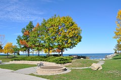 Autumn (ladybugdiscovery) Tags: collingwood waterfront park autumn fall bench brilliant leaves trees blue sky walk path