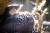 European otter (Lutra lutra) (medXtreme) Tags: water zoo schweiz switzerland wasser steam zürich tierpark fume zoologischergarten steaming dampfend dampf zoologicalgarden dampfen wasserdampf commonotter zoozürich europeanotter cantonzurich eurasianotter laurasiatheria eurasianriverotter eurasischerfischotter europäischerfischotter oldworldotter kantonzürichzh höheresäugetiereeutheria säugetieremammalia raubtierecarnivora hundeartigecanoidea mardermustelidae fischotterlutralutra altweltotterlutra otterlutrinae
